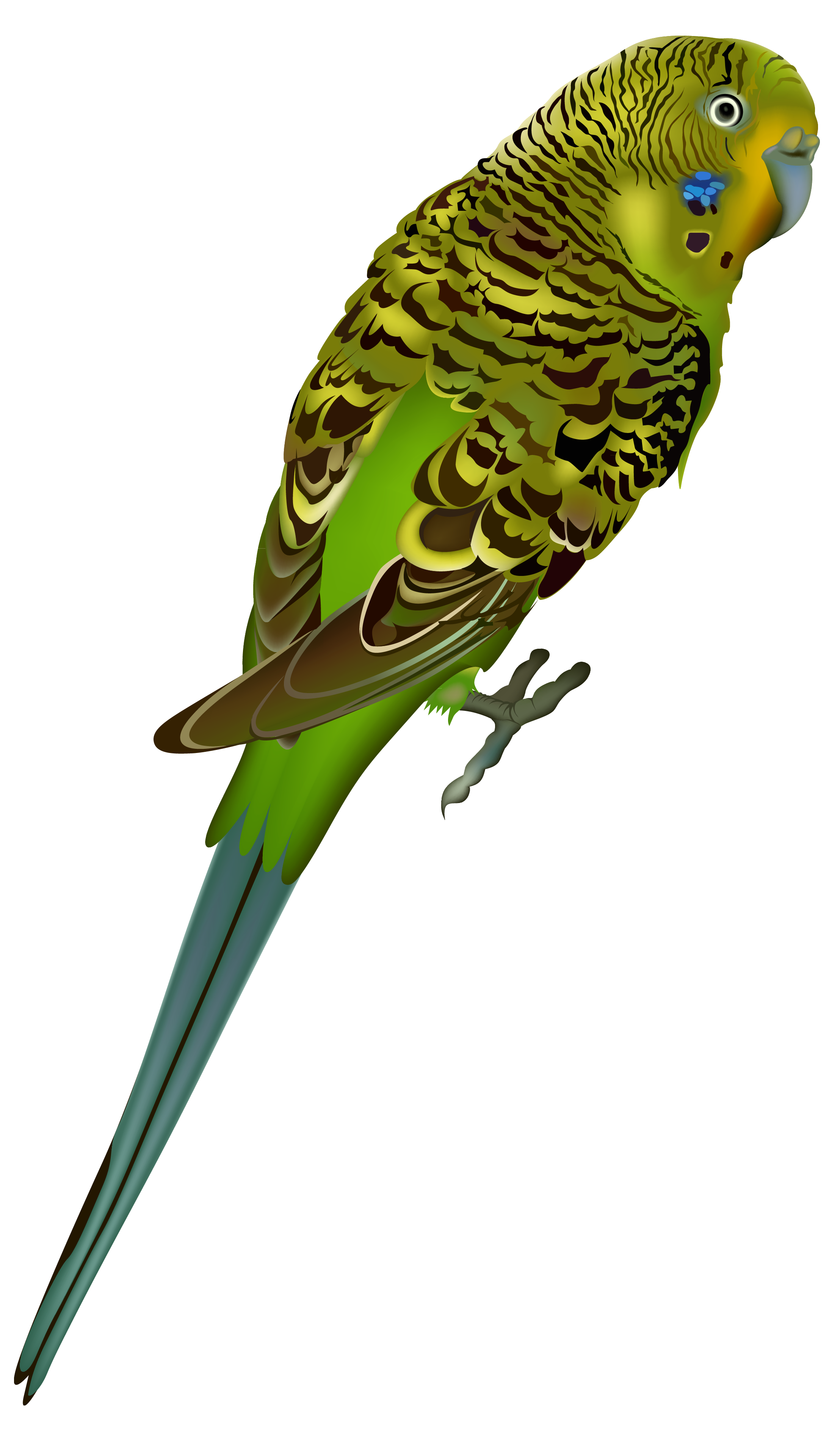 svg library library Reptile clipart swamp bird. Cuckoo parrot free on