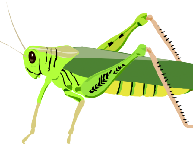 clip transparent stock Grasshopper clipart primary consumer. Locust free on dumielauxepices