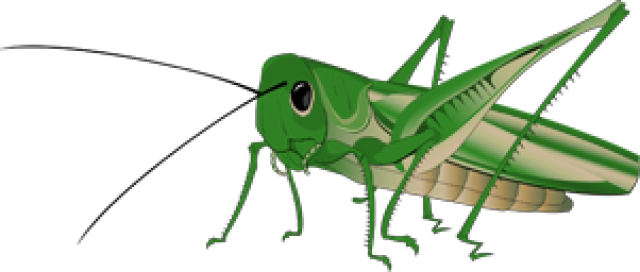 clip library library Grasshopper clipart transparent. Cricket insect drawing at