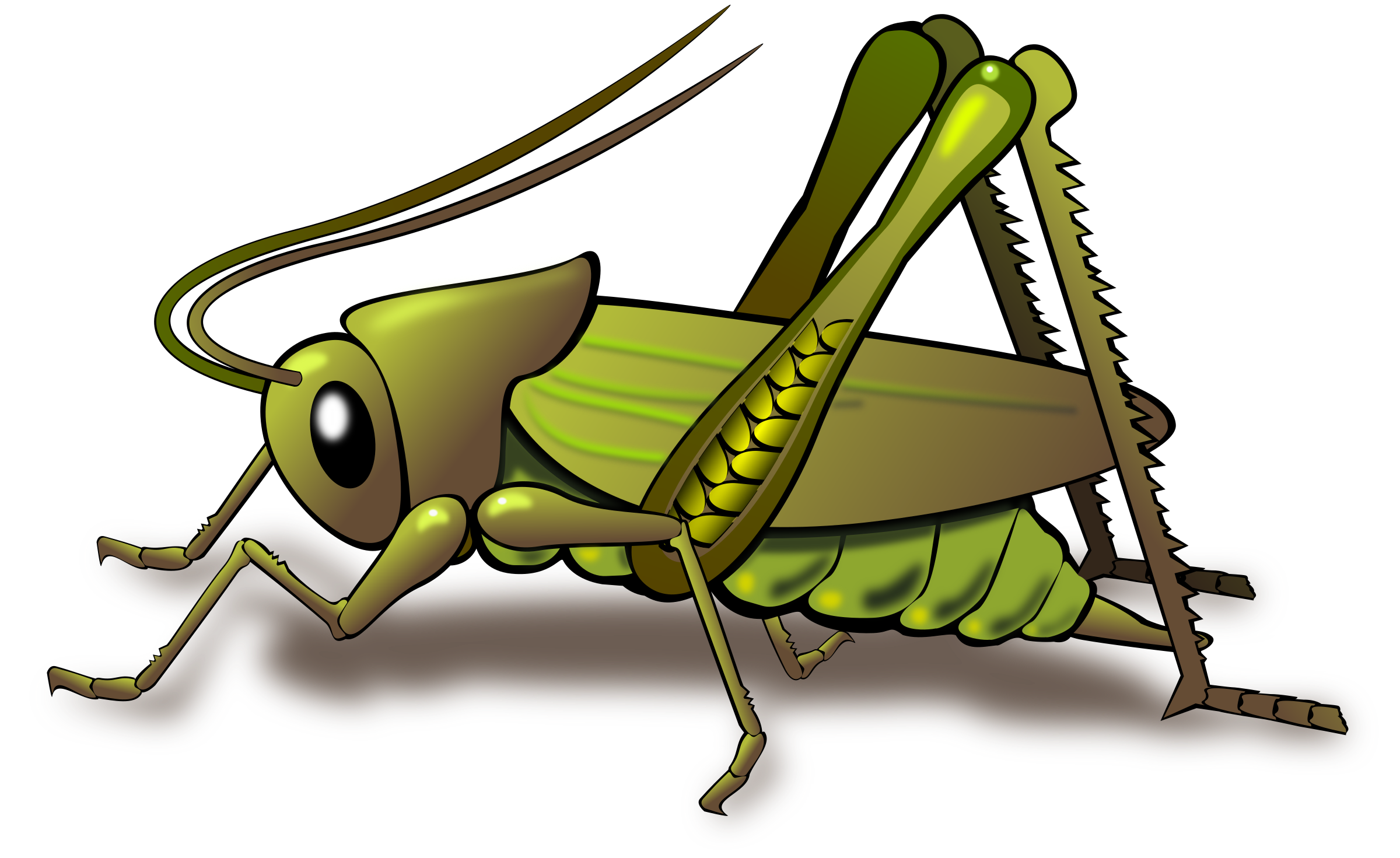 image library stock Grasshopper clipart transparent. Cricket insect png images