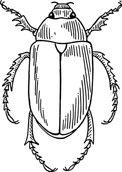 clip royalty free Insect Line Drawing at GetDrawings