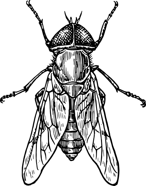 jpg stock Insect clipart black and white free images