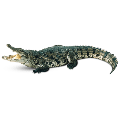 jpg royalty free library Crocodile clipart transparent background. Front png stickpng green