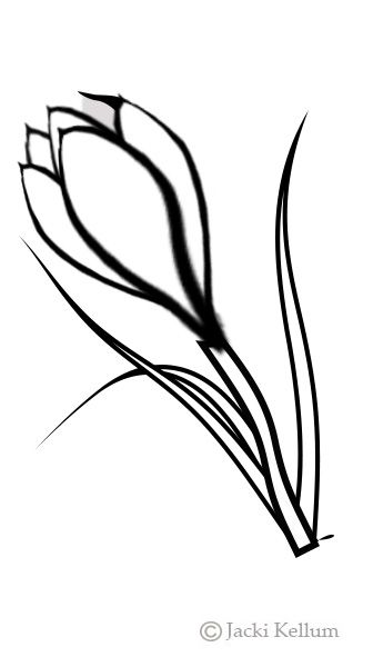 freeuse stock Crocus drawing. Draw a pair of.