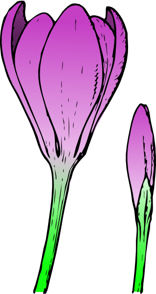 banner freeuse download How to draw a. Crocus drawing.