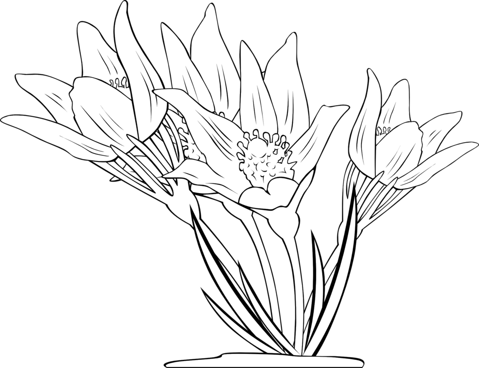graphic royalty free library Public domain clip art. Crocus drawing botanical illustration.