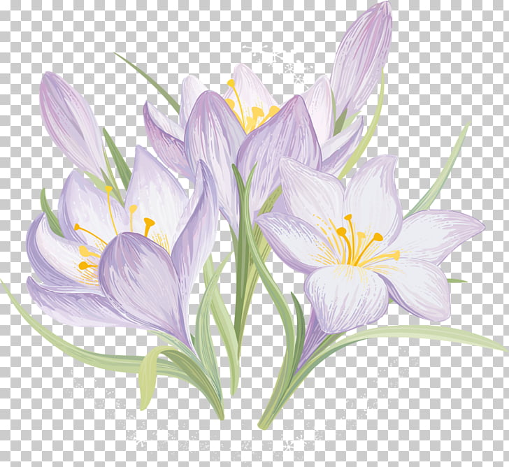 clip transparent library Drawing Flower