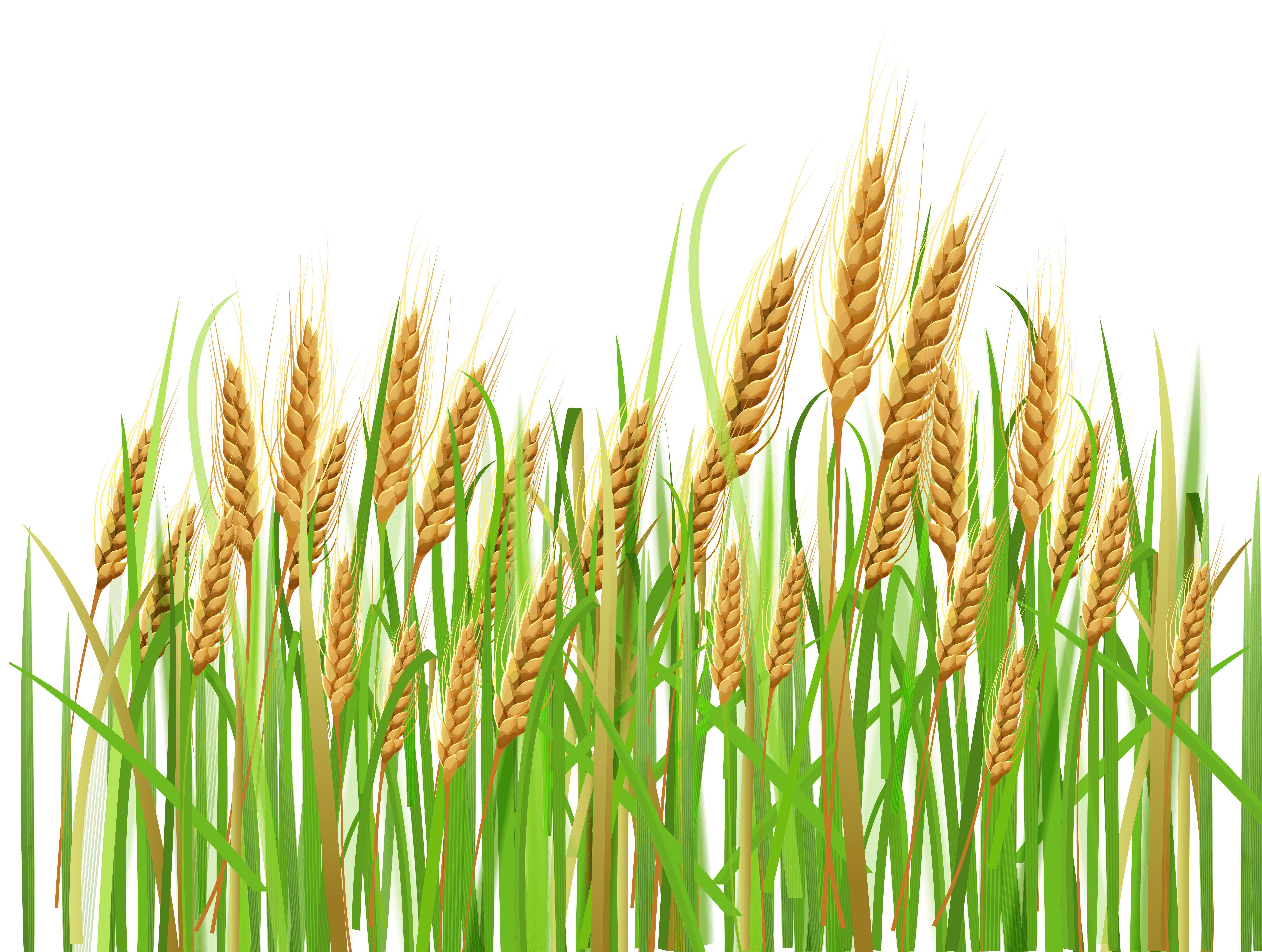 image free stock Crops clipart. Wheat crop transparent free