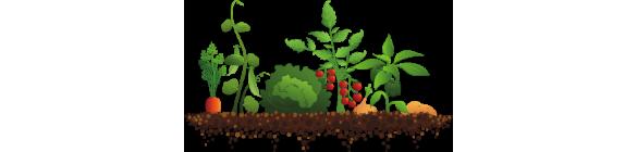 clip Crops clipart. Plants .