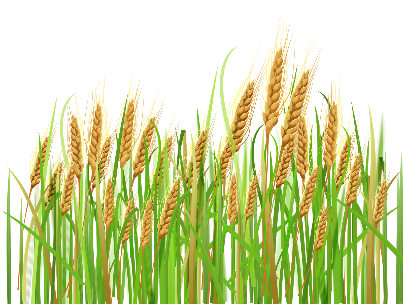 clip free download Barley prices closed higher by