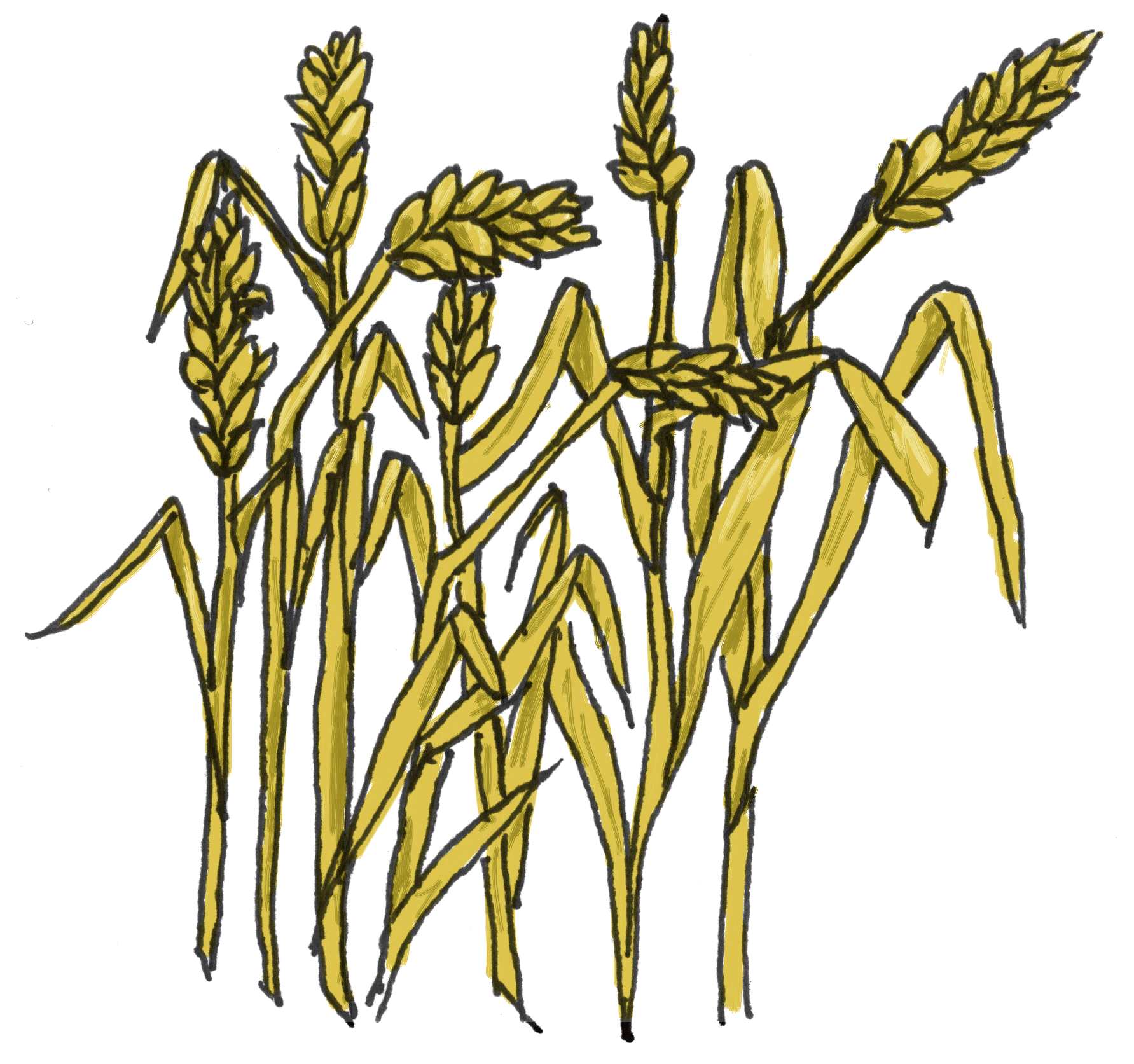 graphic royalty free download Grains clipart palay. Wheat plant free on