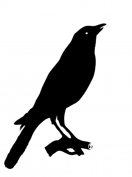 clip library download Crow clipart. Bird free stock photo