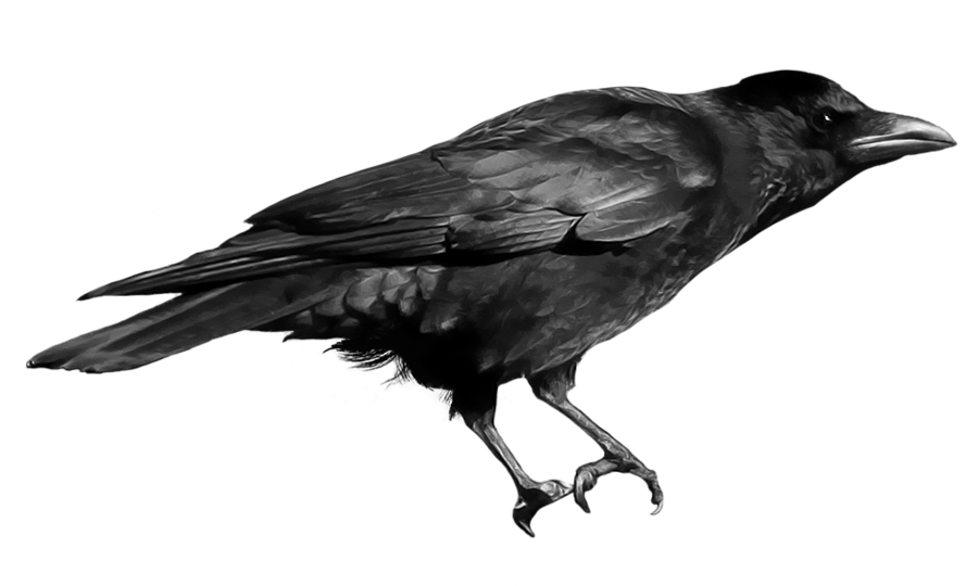 picture free library Raven clipart free download on kathleenhalme