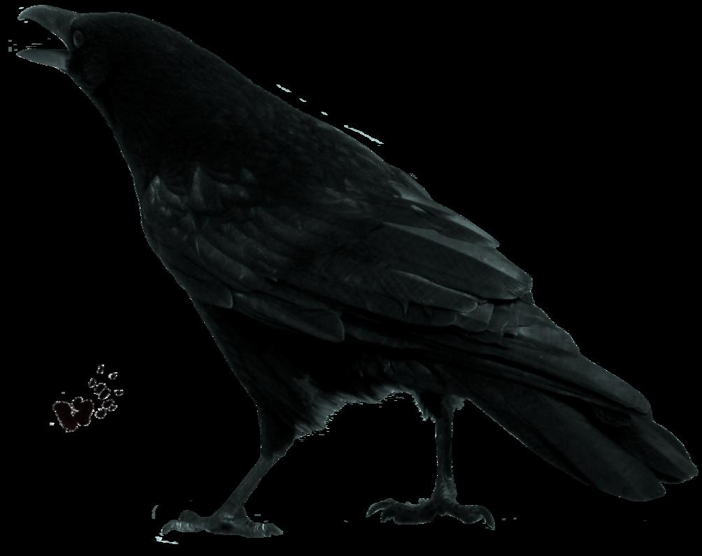 png freeuse Crow PNG Transparent Images