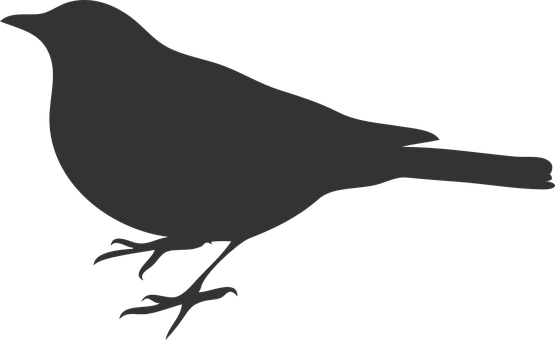 picture royalty free Bird grey crow raven. Blackbird drawing clipart