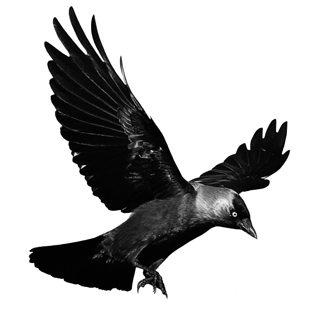 clipart royalty free stock Flying Crow PNG Black And White Transparent Flying Crow Black And