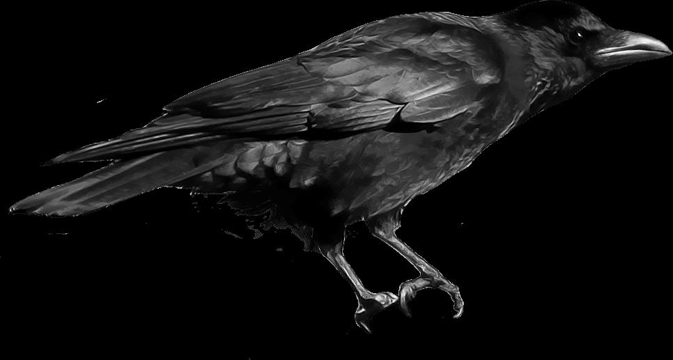 jpg royalty free Transparent crow. Black png stickpng