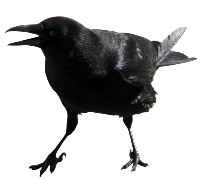 banner royalty free stock Isolated Photos of crow