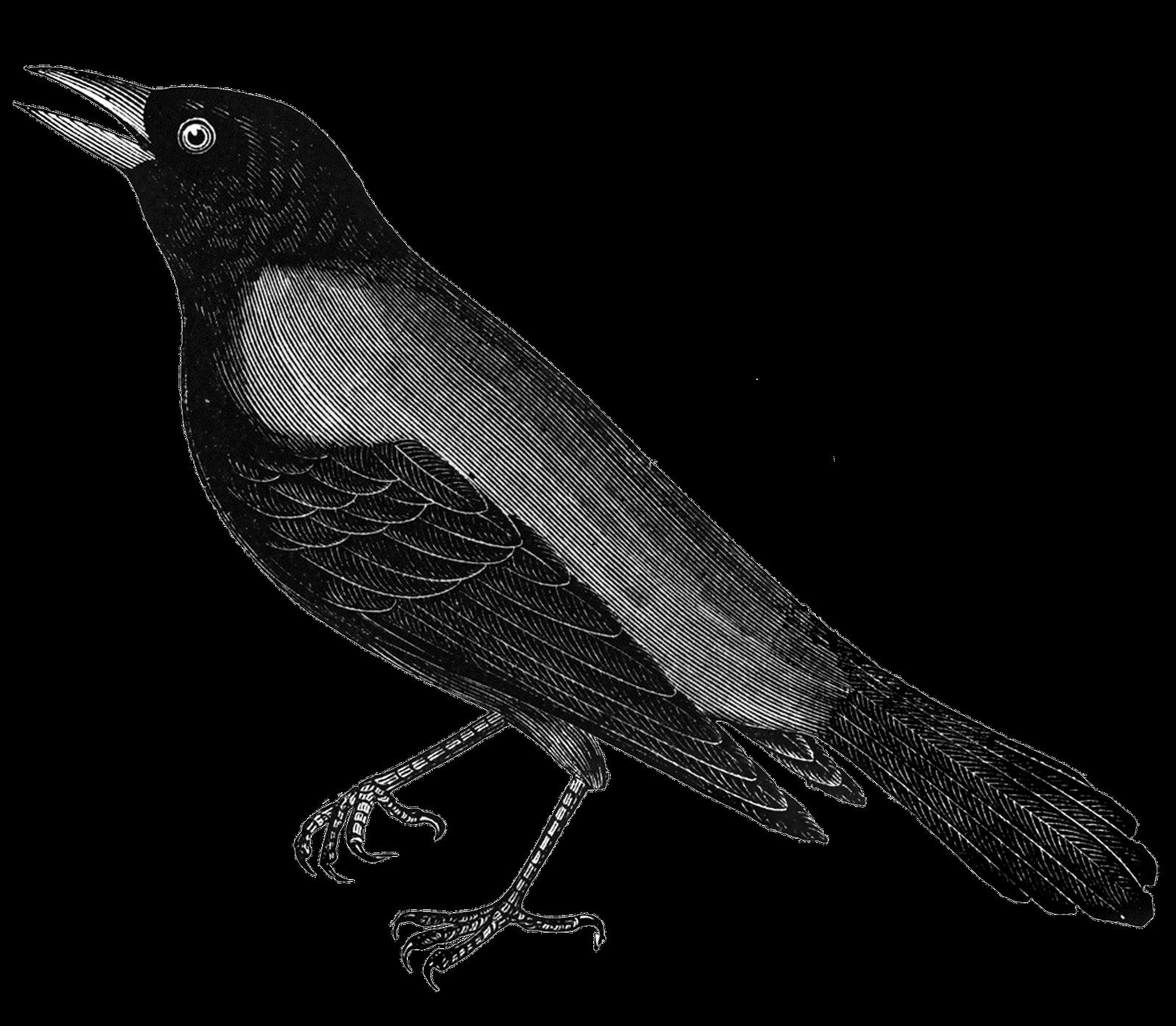 clip black and white Free digital stamps stamp. Blackbird drawing vintage