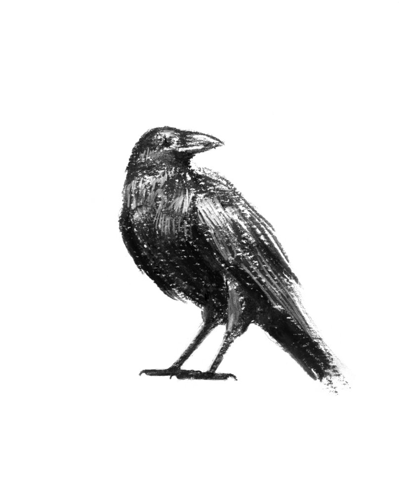 clip art transparent Drawing charcoal crow. I know not by