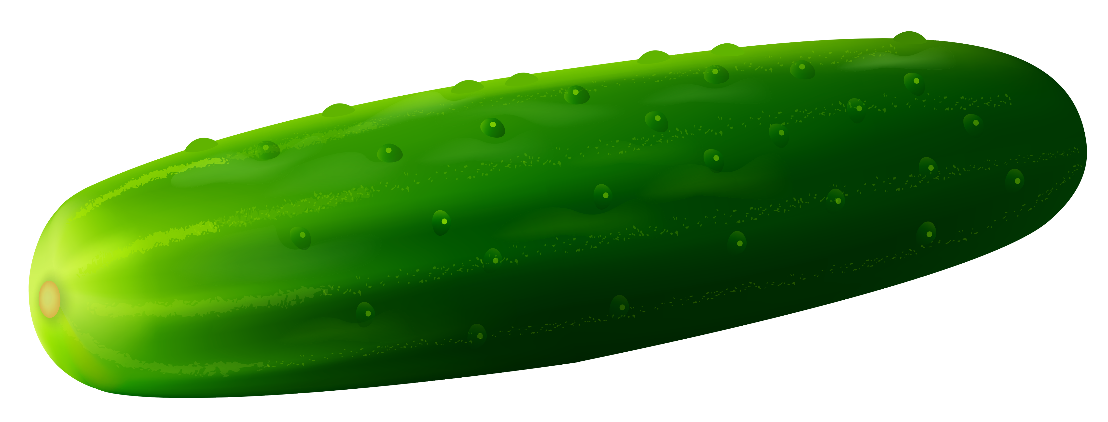 vector freeuse library Transparent cucamber png clipart. Cucumber vector luffa