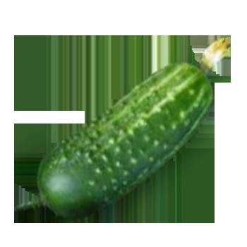 vector free download Cucumber Gallery