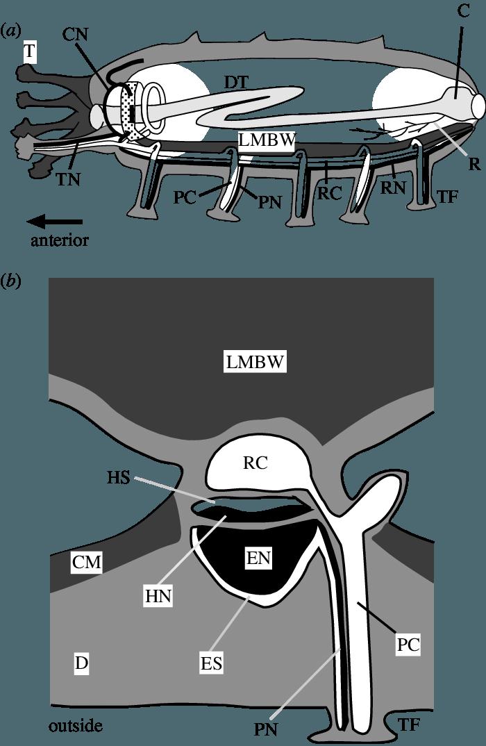 transparent Diagrams of