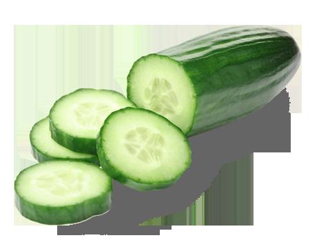clipart download Cucumber supplier