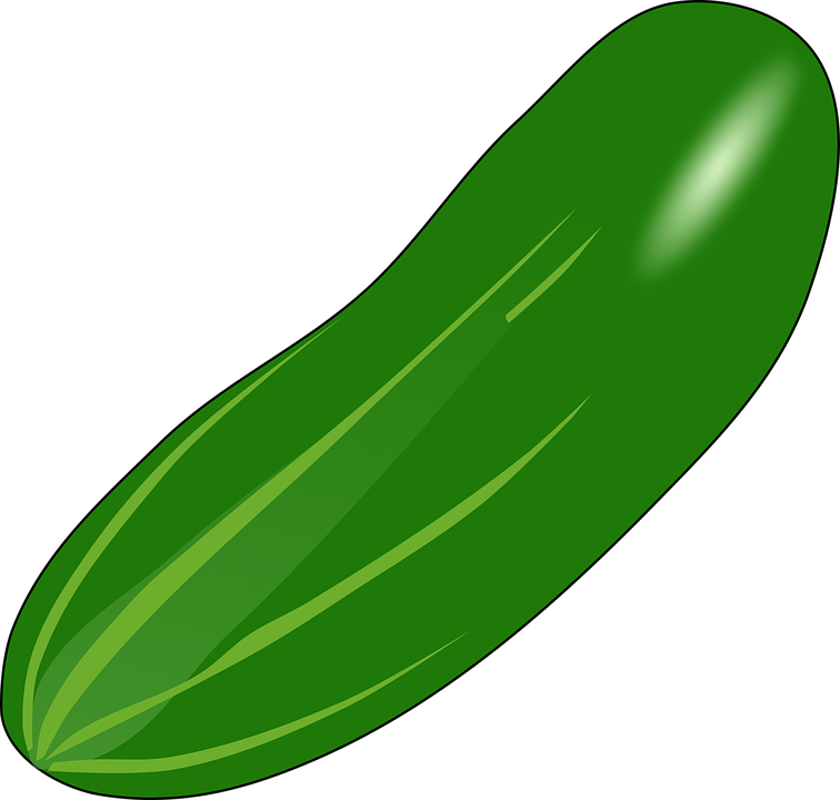 free download Cucumber vector luffa. Clipart green food graphics