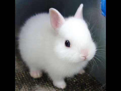 image royalty free Cute cute Cute cute Cute cute Cute cute Cute cute Cute cute Cute cute. Funny baby bunny rabbit.