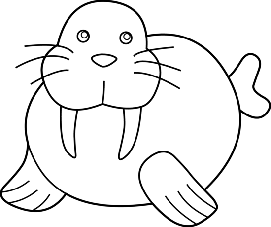 vector free download Walrus clipart tusk. Cute coloring page free