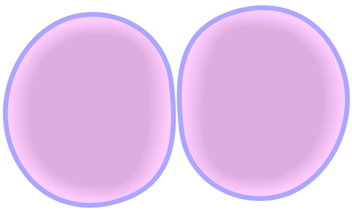 jpg transparent download  collection of easy. Cytoplasm drawing