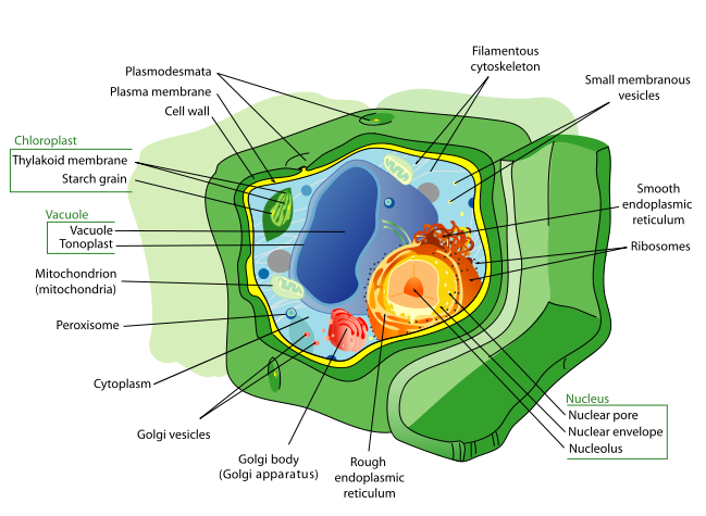 vector library library Plant Cells Structures