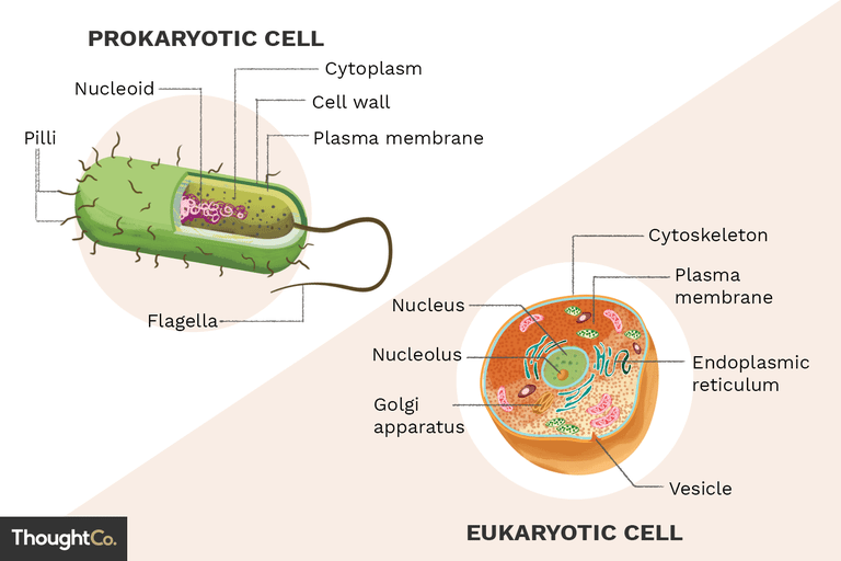 png black and white download What Are the Differences Between Prokaryotes and Eukaryotes
