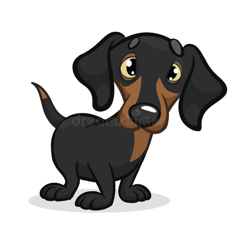 image royalty free Cute Purebred Dachshund Dog