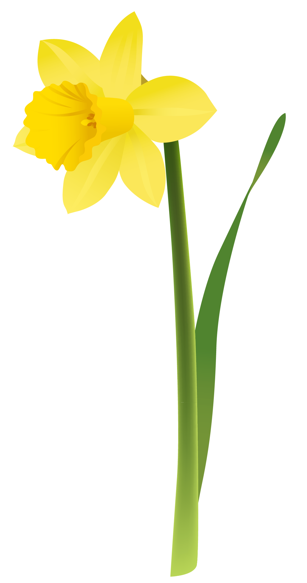 graphic transparent stock Spring yellow png gallery. Daffodil clipart.