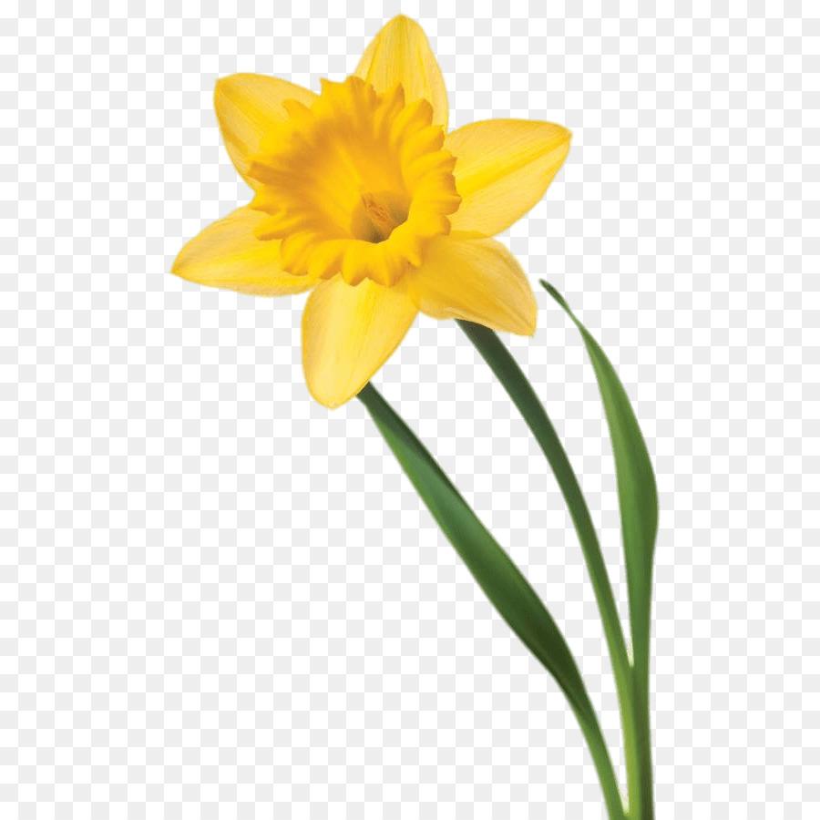 jpg black and white stock Flowers background flower . Daffodil clipart.
