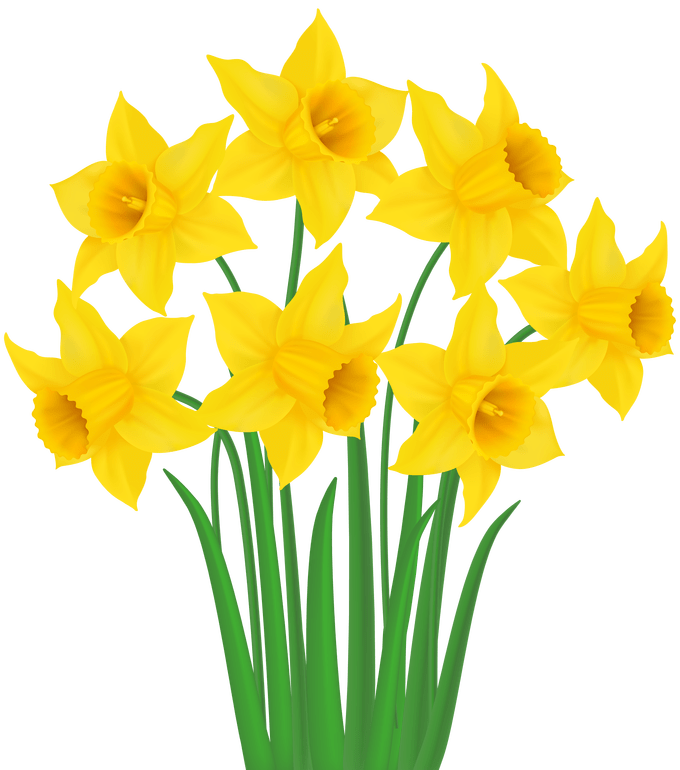 svg freeuse Daffodil clipart. Yellow .