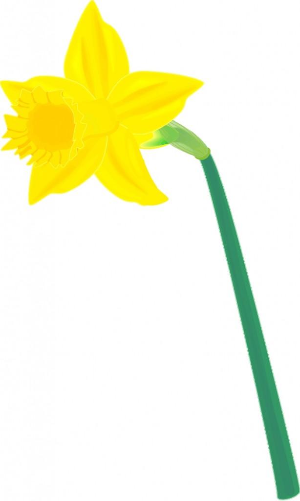 clip art library stock Free cliparts download clip. Daffodil clipart.