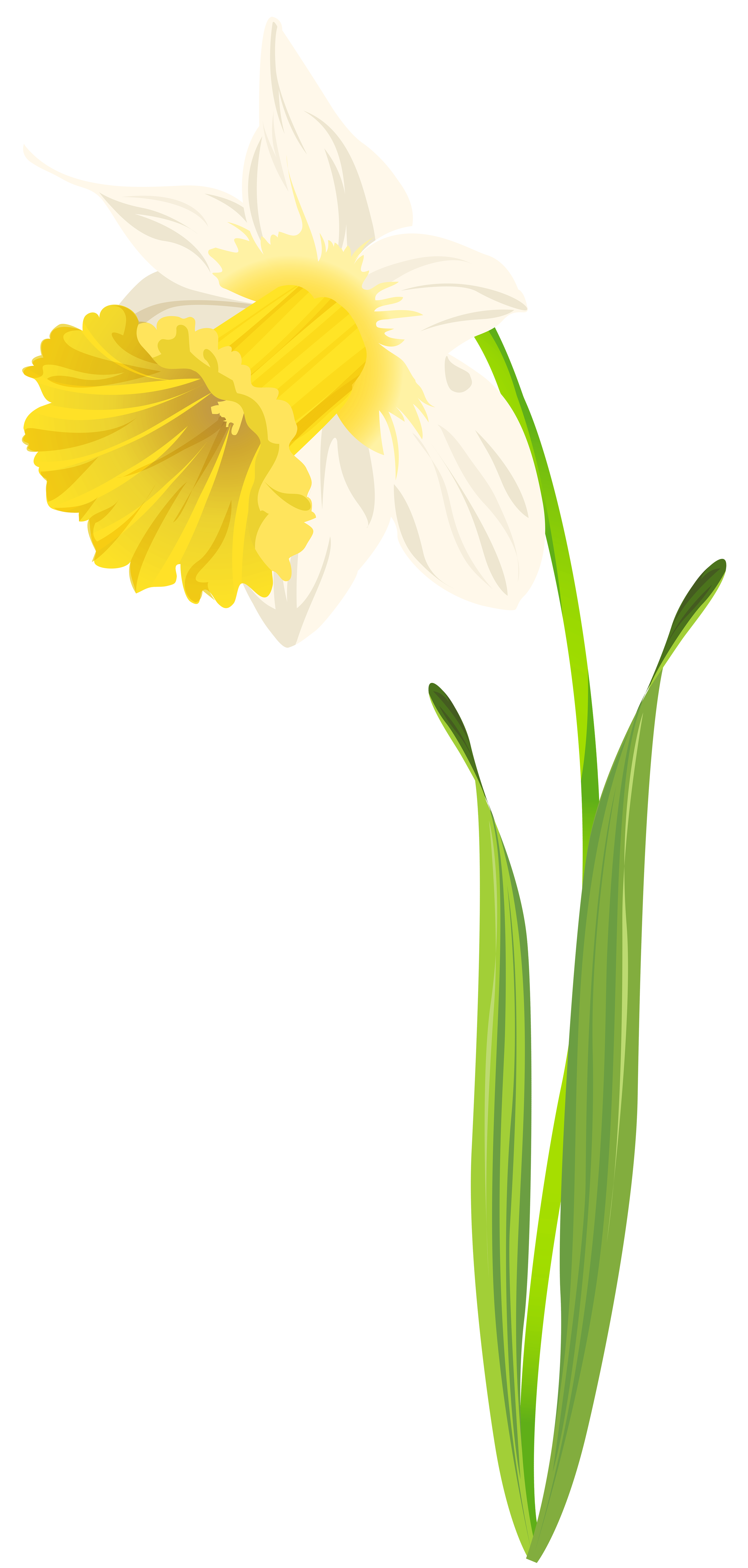 black and white download Png clip art image. Daffodil clipart.