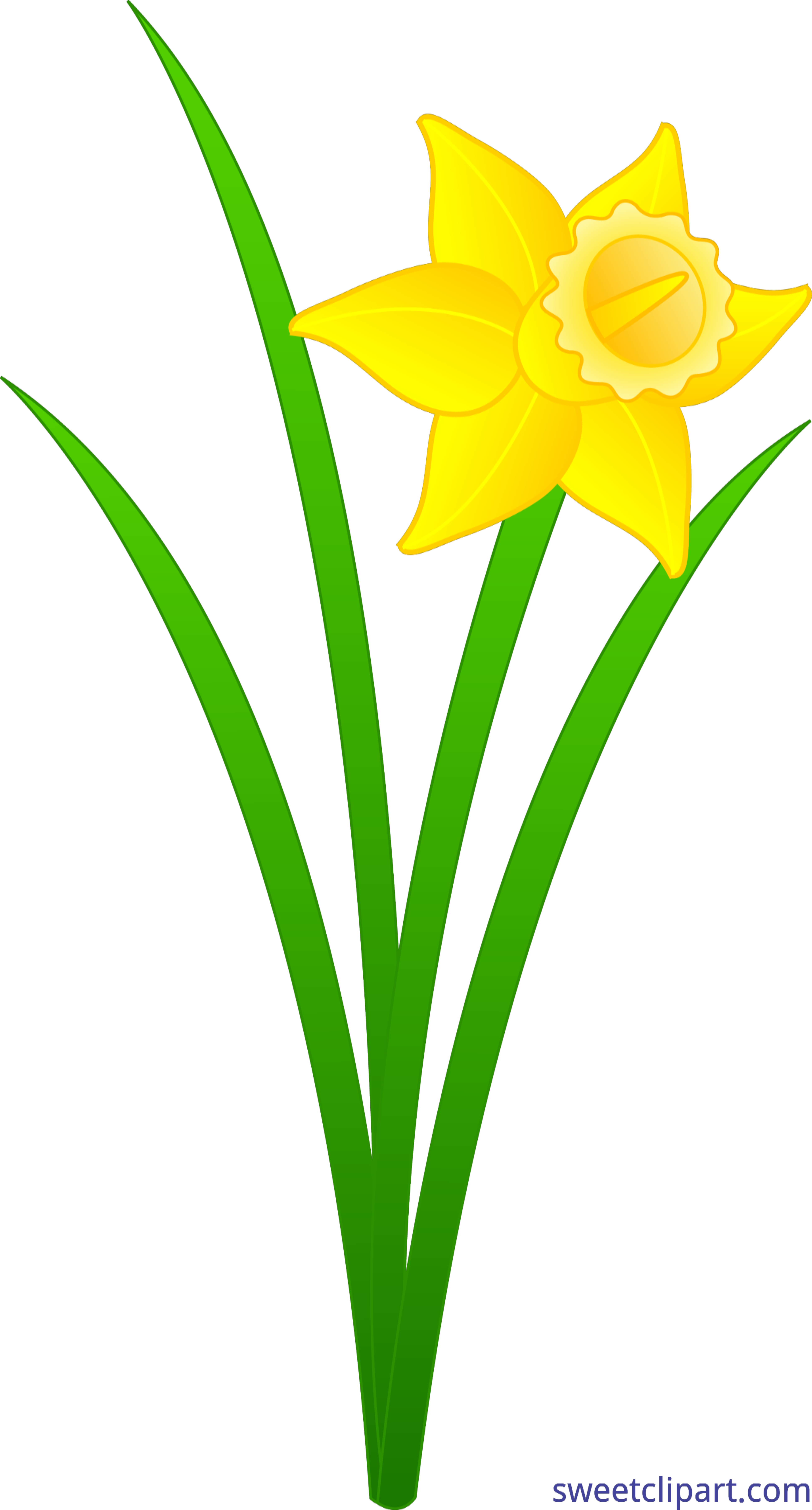jpg transparent library Daffodil clipart. Golden clip art sweet