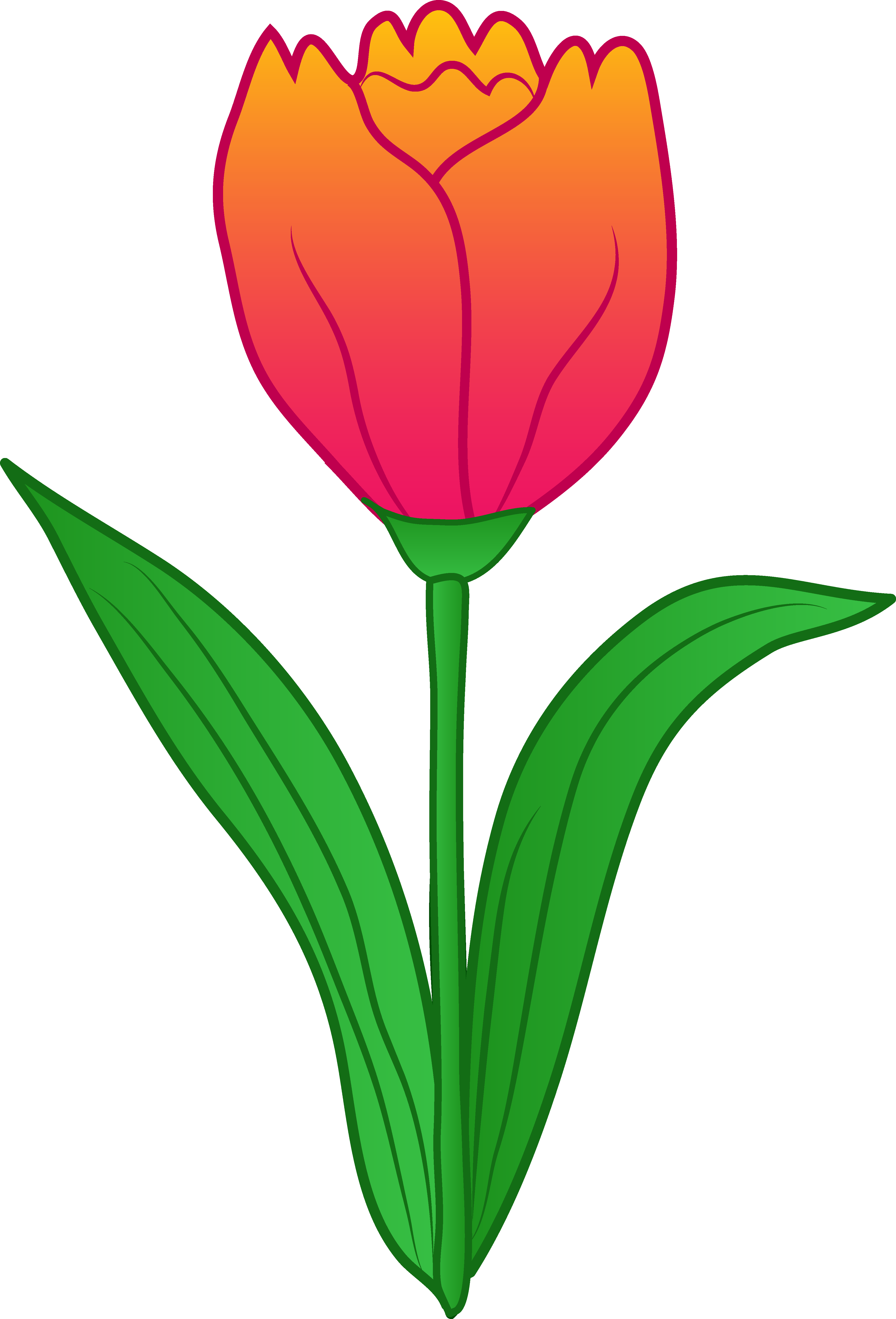 banner Tulips clipart. Daffodil flower at getdrawings.