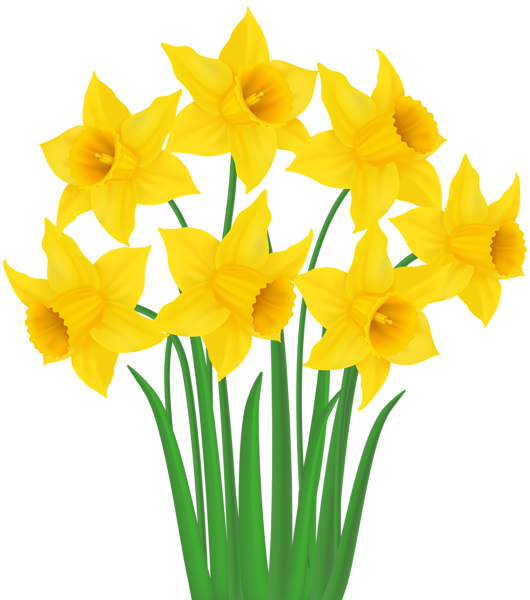 clip transparent stock Flower at getdrawings com. Daffodil clipart daffodil bouquet