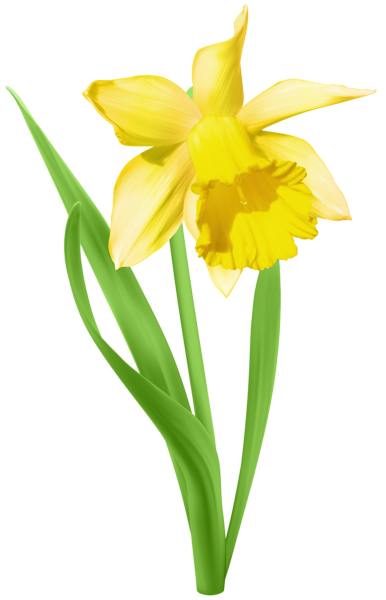clip freeuse library Transparent png clip art. Daffodil clipart.