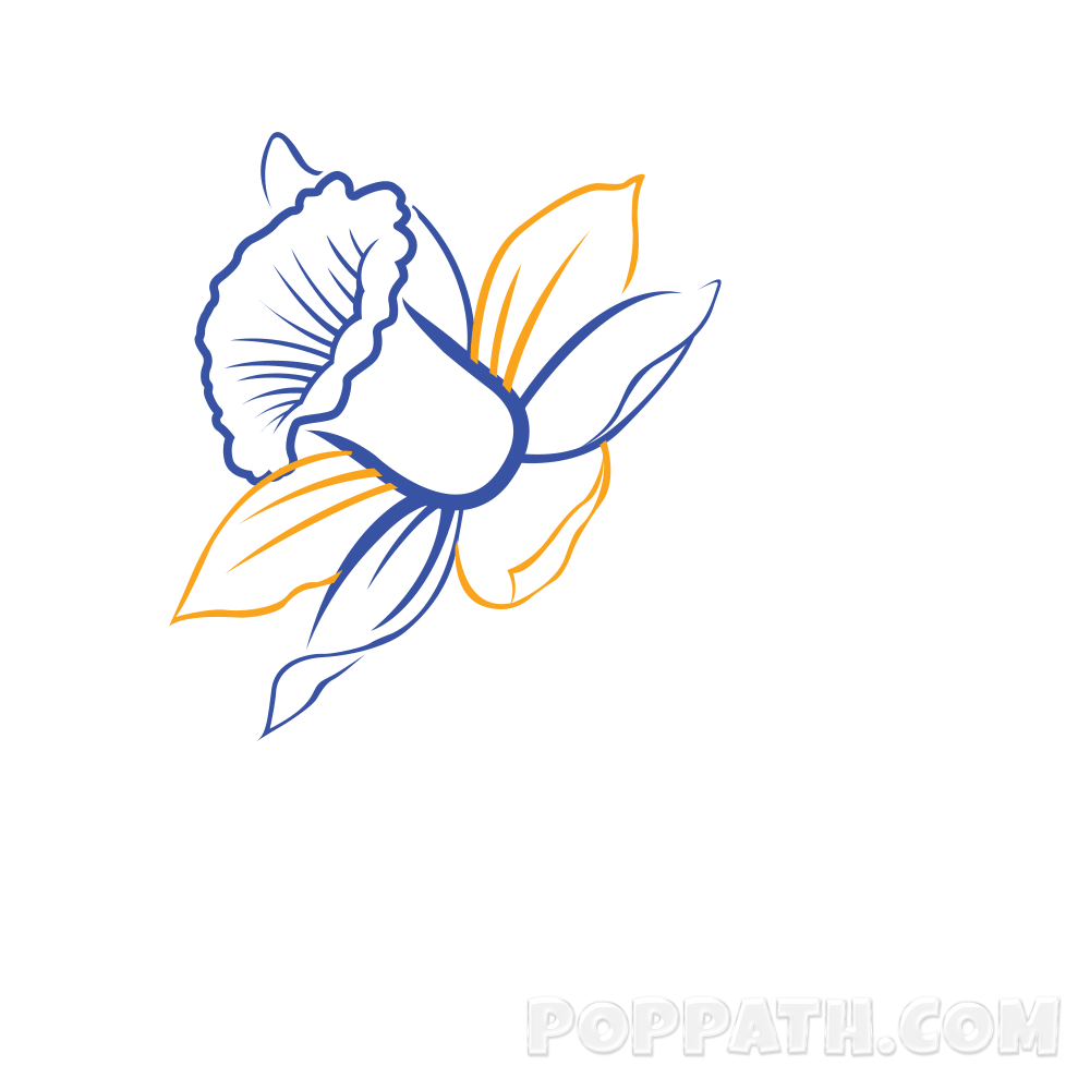 png royalty free stock How To Draw A Daffodil