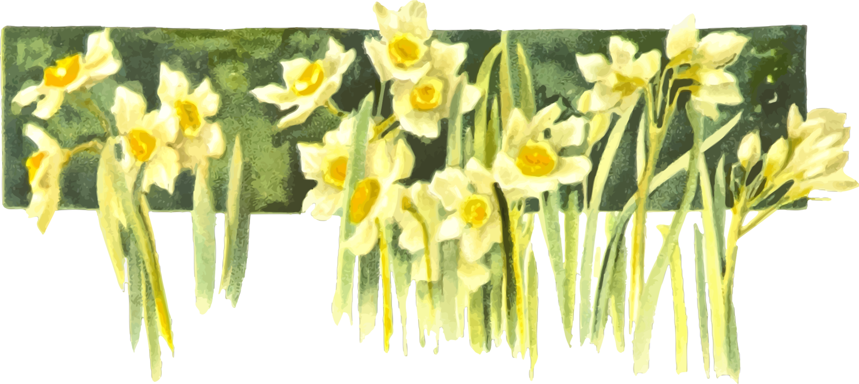 png library download Daffodil Narcissus Drawing Watercolor painting Book free commercial
