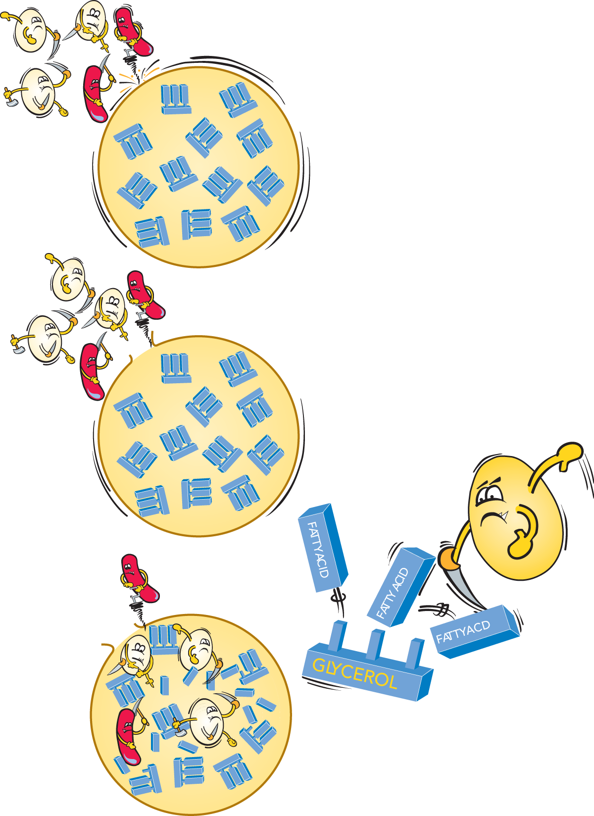 clipart free library The chemistry of milk. Dairy clipart source protein