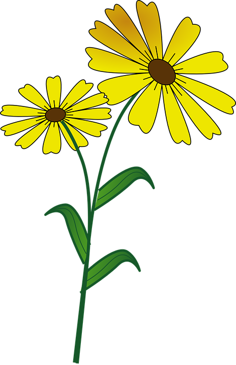 jpg transparent Daisies clipart. Plant insect frames illustrations