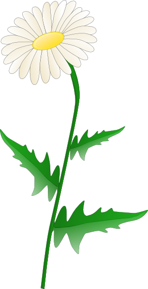 clipart freeuse Daisies clipart garden tour. Tatoo outline of daisy