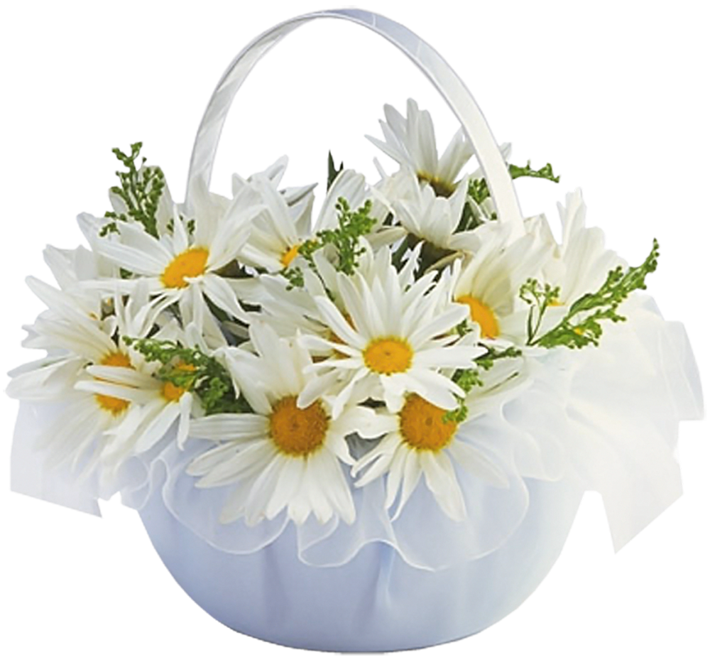 image royalty free stock Daisies clipart wheat grass. Transparent